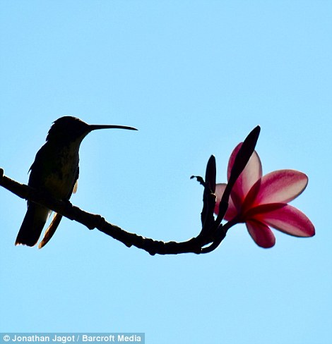 310446FB00000578-3438624-A_silhouette_of_a_bird_seen_sitting_on_a_tree_stem_pictured_on_A-m-82_1455018814878