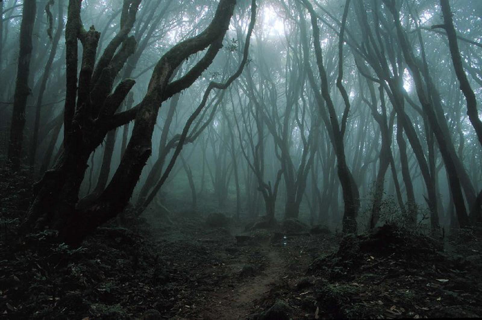 bosque-del-suicidio
