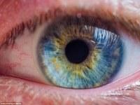 Increíbles macro-fotografías revelan la compleja belleza de los ojos