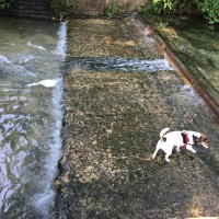 Rolo inspects bridge repairs