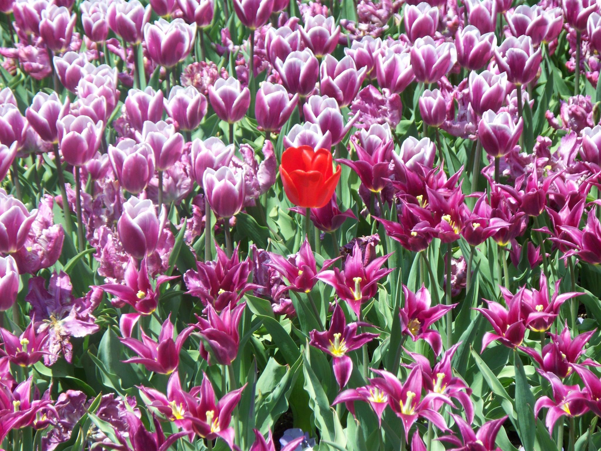 longwood-april-2009-050