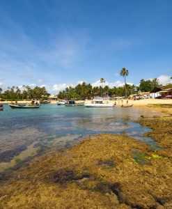 Pacote 9  (Mangue Seco, Ilhas, Praia do Forte)