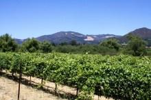 Wine Country (Sonoma/Petaluma)