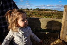 pumpkin-patch-83