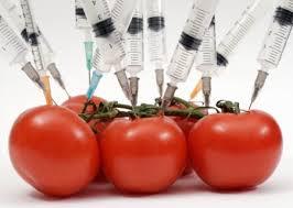 gn0o tomato