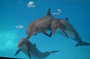 dolphins national aquarium