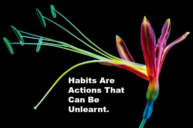 Habits Are Actions That Can Be Unlearnt.