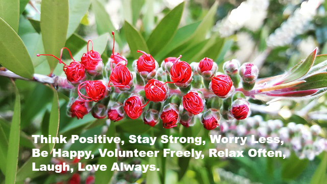 Think Positive, Stay Strong, Worry Less, Be Happy, Volunteer Freely, Relax Often. Laugh, Love Always.