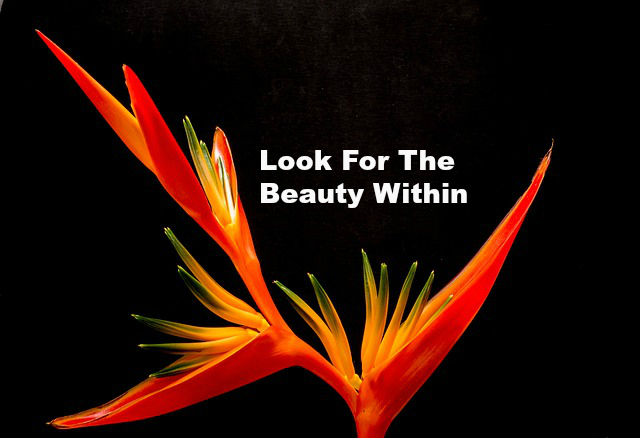 Look For The Beauty Within