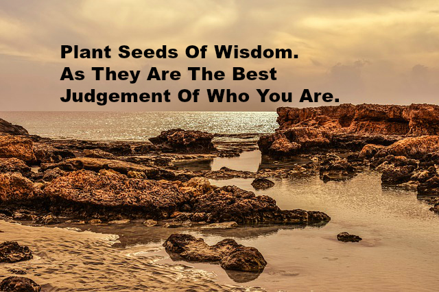 Plant Seeds Of Wisdom As They Are The Best Judgement Of Who You Are