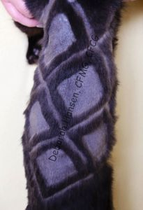 Double Diamond by Deborah Hansen, CFMG, CFCG, creative cat grooming