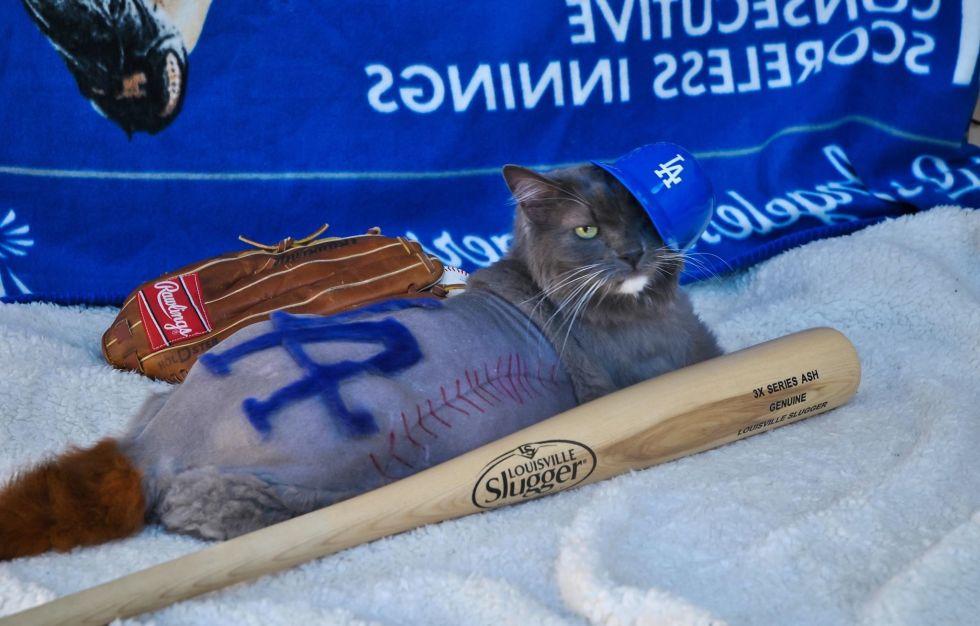Dodger Cat by Deborah Hansen, CFMG, CFCG, creative cat grooming