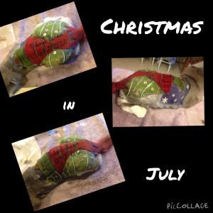 Christmas in July, by Deborah Hansen, CFMG, CFCG, creative cat grooming