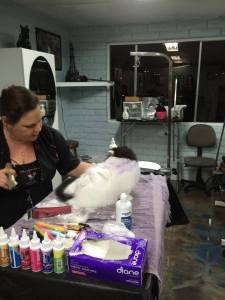Creative Groom in Progress by Deborah Hansen, CFMG, CFCG, creative cat grooming