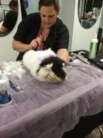 Creative Groom in Progress by Deborah Hansen, CFMG, CFCG, creative cat grooming