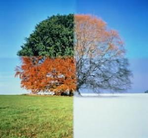 "http://www.deborahhbateman.com/""Seasons-of-life"""