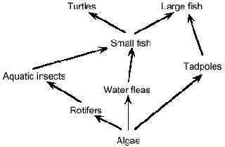 Example Of A Food Web In An Ecosystem