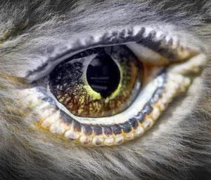 APEX eye image