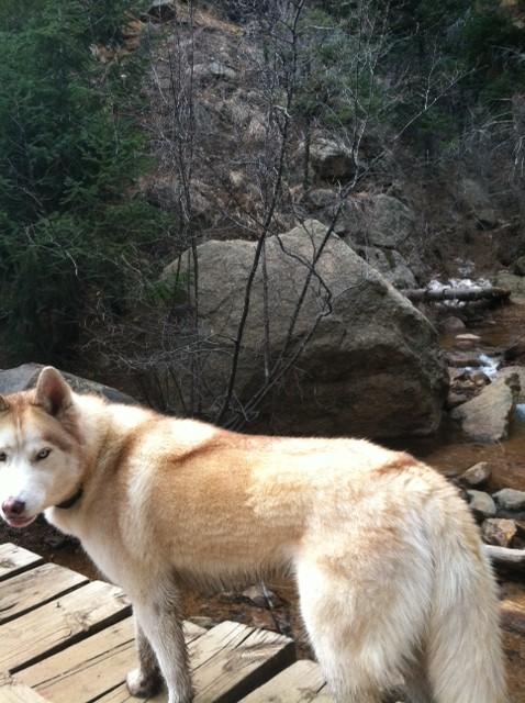 Max at Seven Bridges