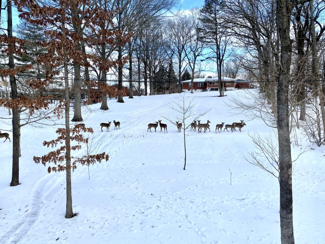 Even in winter, the screened porch offers inspiring views of the many deer and other critters that call our backyard woods home.