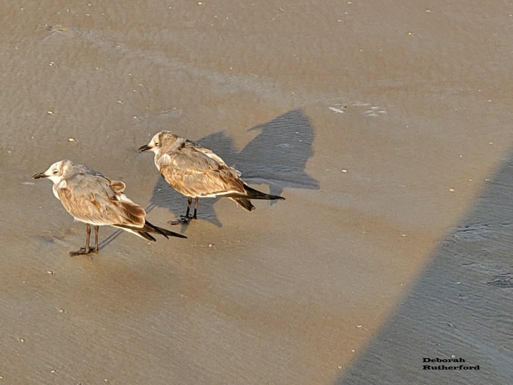 Two birds, Daytona Shores, Florida