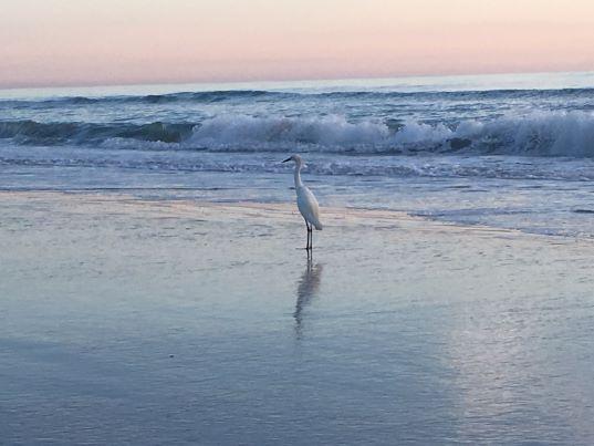 Crane on the Beach