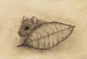 Shy Mouse by Deborah Sheehy