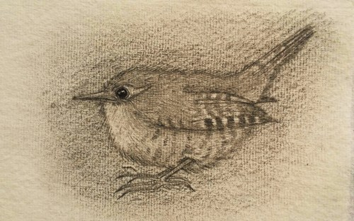 Wren drawing