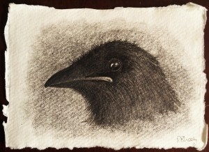 Crow fledgling drawing
