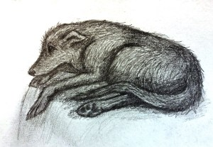 lurcher pencil drawing