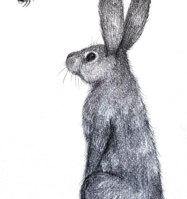Hare and bee charcoal drawing