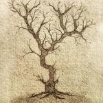 Gnarly Tree - the need for wild places