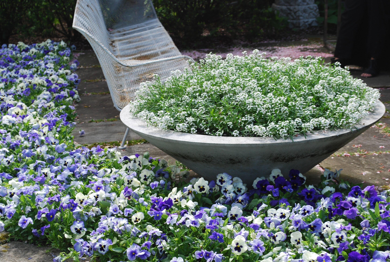 Garden Of Pansies