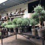Topiary Lavender Deborah Silver Co