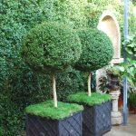 Topiary Deborah Silver Co