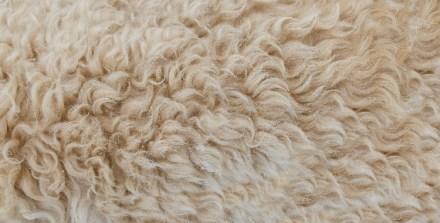 lana de pelo de camello