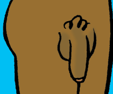 Petit cours d'éducation sexuelle : le pénis