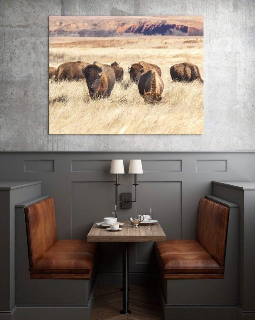 Bison lone tree debra gail photography fine art prints commercial restaurant hotel office interior design great plains flint hills