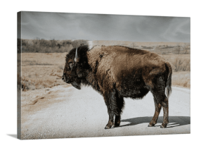 tatanka american bison wall art wholesale retail ranch collections Framed Bison Wall Art