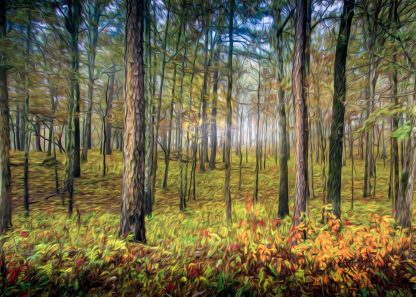 best pictures for office walls Autumn Woodlands Woodland Wall Art No. 71 the best debra gail02