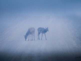 elk wall art fog
