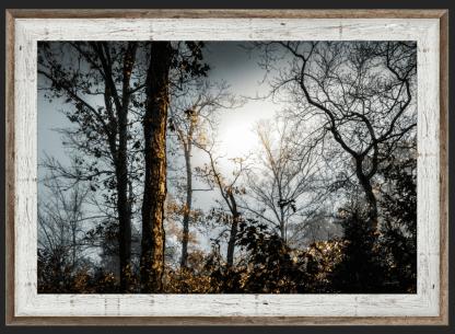 foggy woodlands best photography debra gail two toned barnwood framed