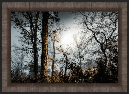 foggy woodlands best photography debra gail gallery wood framed