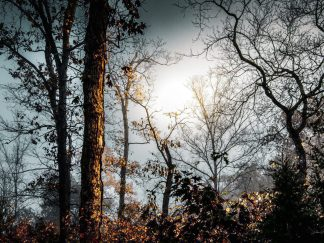 foggy woodlands wall art photography debra gail