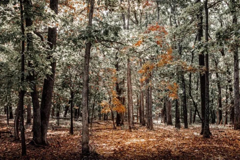 interior designers autumn trees wall art debra gail