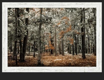 autumn trees wall art debra gail