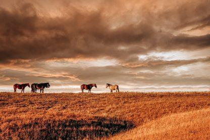 Wild Horses 8877