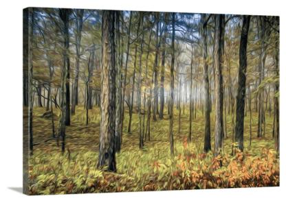 wood framed autumn woodlands photography debra gail