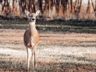deer wall art debra gail photography