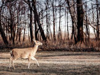 deer wall art photography debra gail